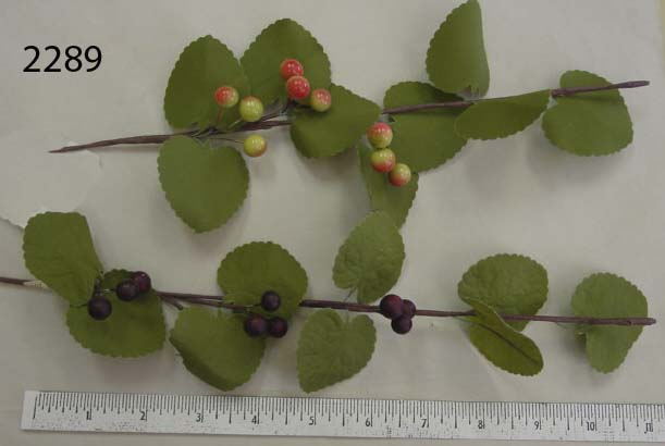 Berry Branch