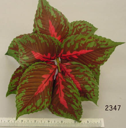 Coleus Leaf Clump
