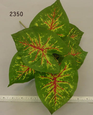 Caladium Leaf Clump