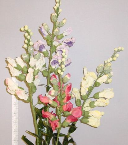 Snapdragon for interior design