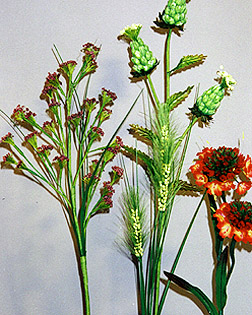 Five Seed Stems for home d