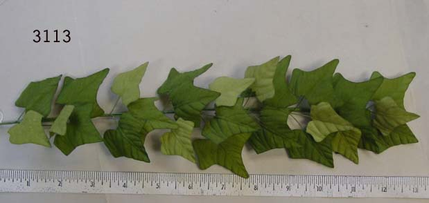 Ivy Leaf Branch