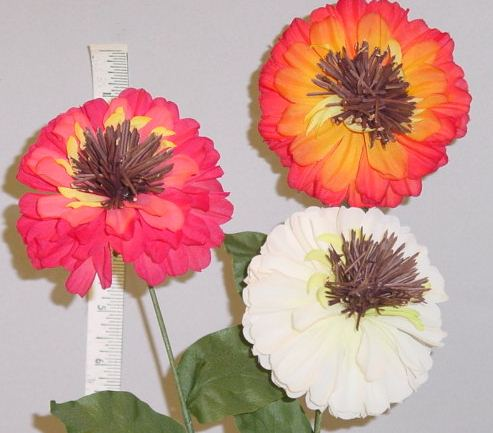 German Zinnia jhome d